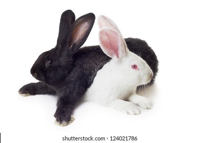 two rabbits white and black shot against white background