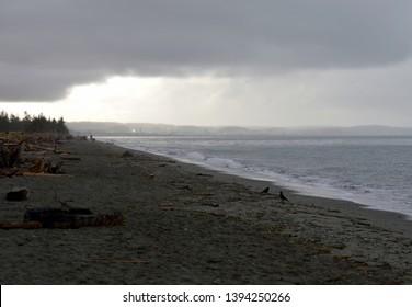 Two Ravens on an Overcast Beach, Deception Pass State Park, Washington