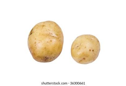 Two raw potato isolated on white background