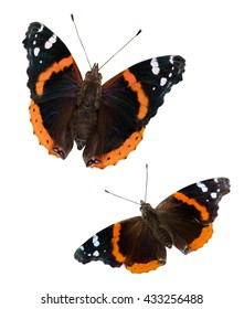 Two Red Admiral butterflies (Vanessa atalanta) isolated on a white background with a clipping path