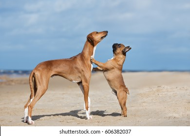 two red dogs posing on a beach together