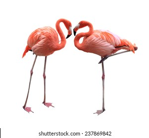 Two red flamingo birds isolated on white background