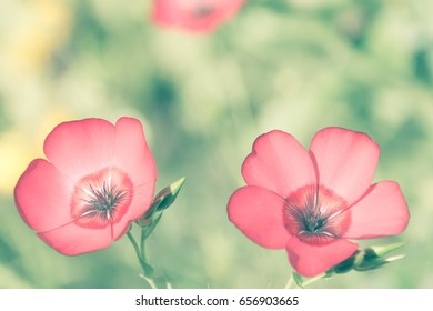 two red flowers on a faded natural green background