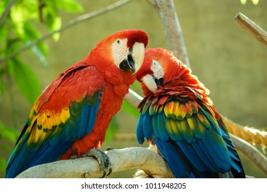 two red and green macaws sitting on a branch