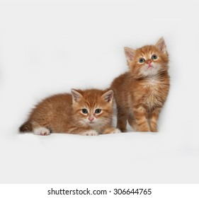 Two red kitten on gray background