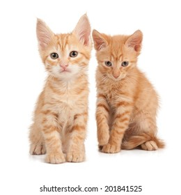 Two red kittens on a white isolated background look ahead