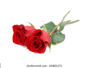 two red rose gift