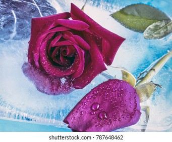 two red roses frozen in ice, winter