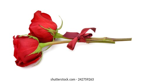two red roses isolated on white background