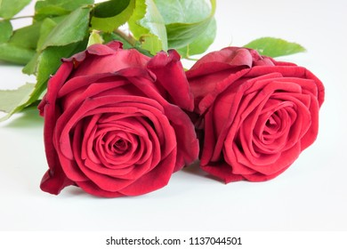 Two red roses on white background