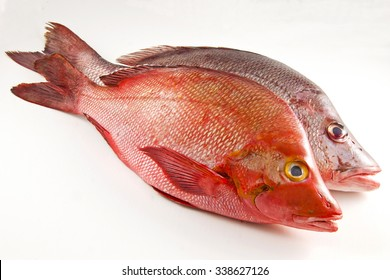 Two Red Snappers, white background.
