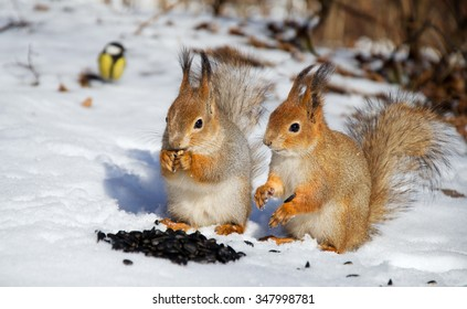 Two red squirrels and bird