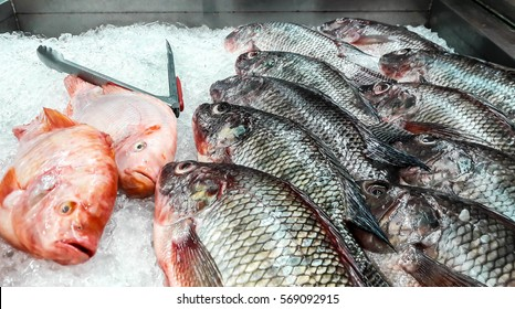 Two red Tilapia and ten Nile Tilapia fishes are frozen in the ice of refrigerator for selling in  fresh food department of supermarket.