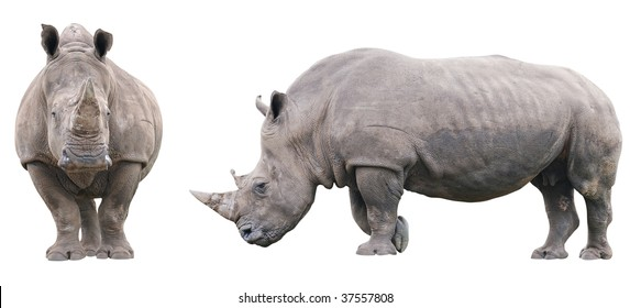 Two rhinoceros isolated on white background without shadows. Front and side views.