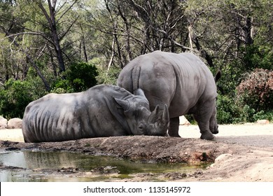 Two rhinos resting on the water and in the shade