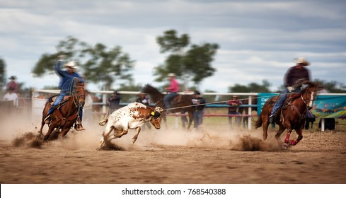 Two Riders Roping A Calf At A Country Rodeo