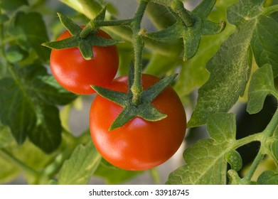 Two ripe cherry tomatoes on the vine.