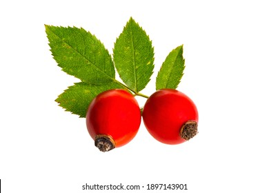Two rose hip berries with green leaf isolated on white background. Red ripe fruit from nature cut out on blank. Detailed close-up on raw herbal food.