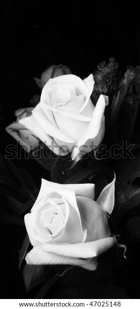 9d169ccc6 Two Roses Black White Stock Photo (Edit Now) 47025148