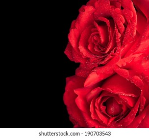 two roses with drops on black background, valentine day and love concept