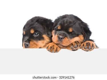 Imágenes, fotos de stock y vectores sobre Rottweiler