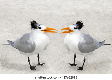 Two royal terns facing each other on a sandy beach.