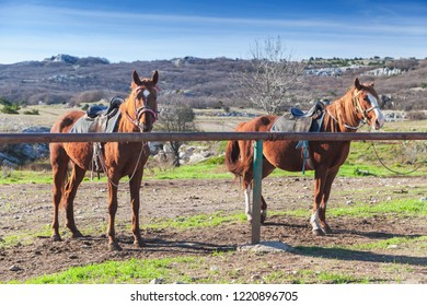 Two saddled red horses stand tethered on a mountain meadow at summer day