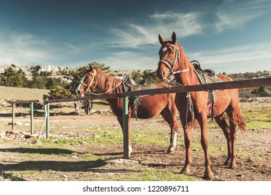 Two saddled red horses stand tethered on a mountain meadow at summer day. Vintage tonal filter effect