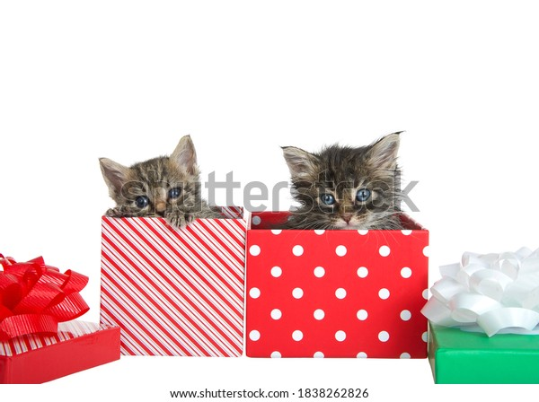 two-scruffy-kittens-peaking-out-600w-183