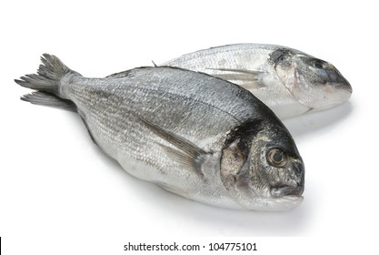 Two Sea Breams on the white background