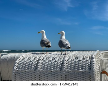 Two sea gulls sitting on a top of white beach chair strandkorb and look on Baltic Sea on a beach on island Ruegen