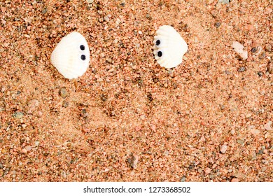 Two sea shell with googly eyes, lie on the sand and look at each other. Close-up macro.