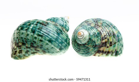 two sea shells isolated on white background