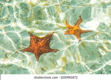 two sea stars in ocean - star fish underwater -