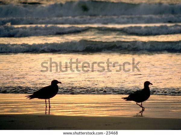 two seagulls enjoying the sunset