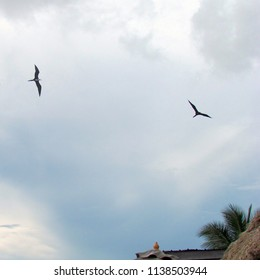 two seagulls fly overhead; Belize City, Belize