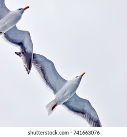 Two seagulls flying in blue sky