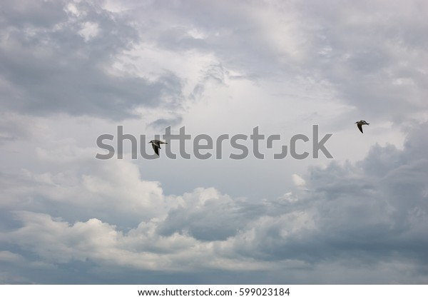 Two Seagulls flying in the dark storm cloudy sky. Rainy ominous grey storm clouds - dramatic sky