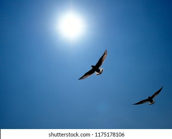 Two Seagulls flying over the clear blue sky under the sun shining