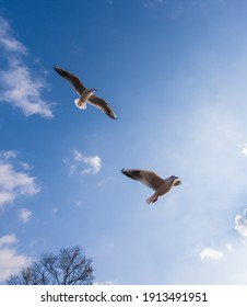 two seagulls flying side by side