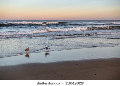Two seagulls just before sunset on the beach at Avon by the Sea along the New Jersey coastline.
