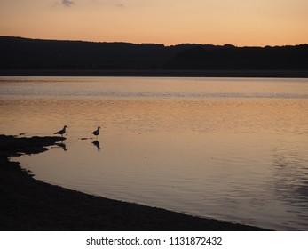 Two seagulls on the Kent Estuary near Arnside, Cumbria, England, at sunset