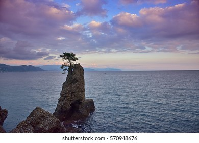 Two seagulls perched on a rock with a maritime pine in a sunset sky on the Tigullio gulf, Liguria, Italy