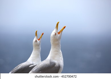two seagulls singing near a port in Bonifacio , France
