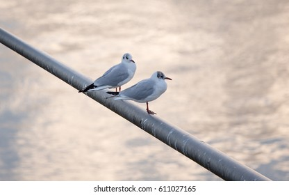 Two seagulls sitting on metal rod over bright water