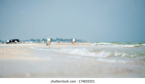 Two seagulls sitting in the surf on the sea beach