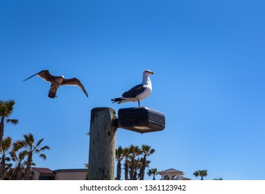 two seagulls in southern california