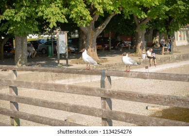 Two seagulls stand on a wooden railing on a pier with blurred people in the background