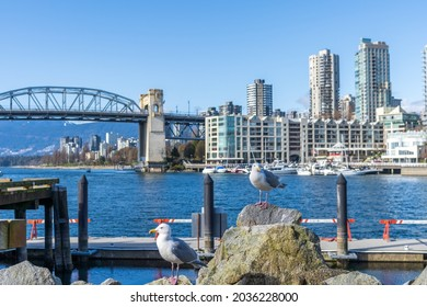 Two seagulls standing in the Granville Island Ferry Dock. Burrard Street Bridge in the background. Spring time in Vancouver, BC, Canada. March 25 2021.