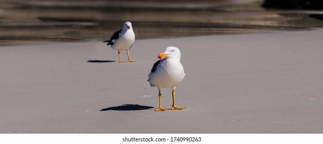Zwei Möwen stehen am Strand, mit geringer Aussicht